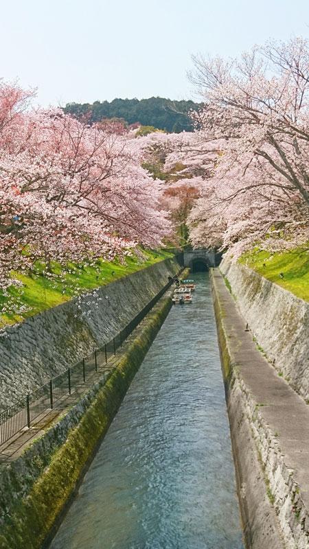 桜の観賞スポット